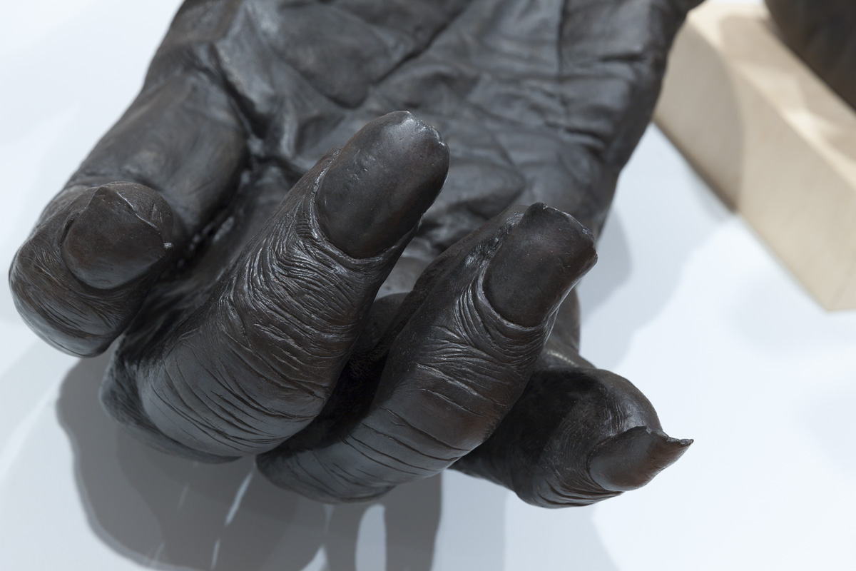 Lisa Roet, Chimpanzee Hands
