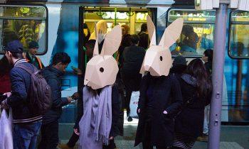 Human Rabbits