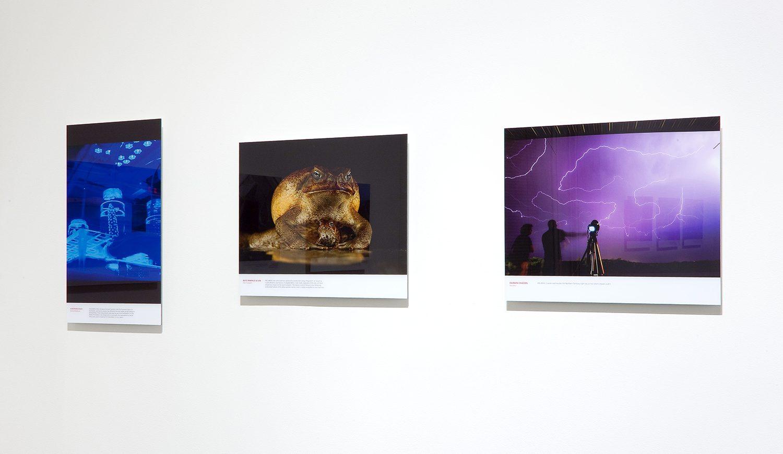 RMIT Gallery Artist Talks – Part 1 – New Scientist Eureka Science Photography Prize